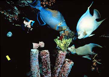 Diver Feeding Blue Fish at the New England Aquarium in Boston